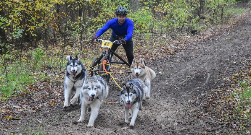 Na zdjęciu widać uczestnika nr 82 wyścigu wraz psim zaprzęgiem. W zaprzęgu są cztery psy o biało-szarej maści.